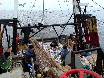 Bardzo dobre wyniki połowowe floty bałtyckiej w I połowie 2018 r.