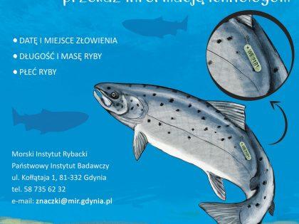 Rybaku, Wędkarzu złowiłeś znakowaną rybę – przekaż informację ichtiologom