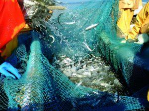 Stan zasobów ryb Bałtyku i zalecane przez ICES dopuszczalne połowy (TAC) w 2018 roku