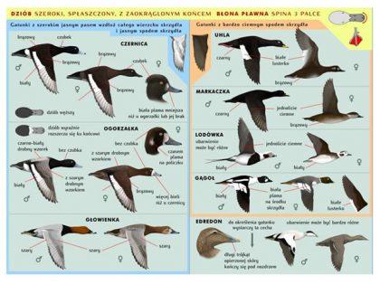 Monografia: Opracowanie podstaw racjonalnego monitorowania przyłowu ptaków w celu zrównoważonego zarządzania rybołówstwem przybrzeżnym na morskich obszarach Natura 2000