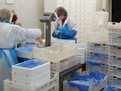 Kodeks dobrych praktyk produkcyjnych w przetwórstwie ryb