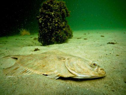 Oświadczenie MIR-PIB w sprawie stanu środowiska Zatoki Puckiej